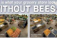 Importance-of-bees