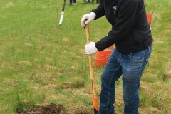 Cambridge Tree Planting