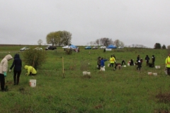 Tree planting York Region